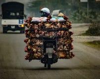Trans. av vid liv höna på en moped i Vietnam asia Fotografering för Bildbyråer