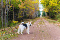 Trans Canada Trail Stock Image