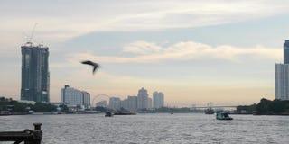 Trans. på Chao Phraya River, Bangkok, Thailand lager videofilmer