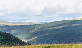 Transalpina road with hills covered with green grass Stock Images