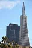 The Transamerica Pyramid in San Francisco Royalty Free Stock Images