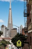 Transamerica pyramid tower. View of the transamerica pyramid from the top of the hill san francisco, united states Stock Images