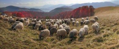 Transcarpathian牧场地在秋天 免版税库存照片