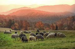 Transcarpathian pastures in autumn Royalty Free Stock Images