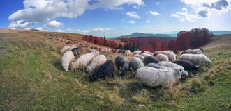 Transcarpathian pastures in autumn Royalty Free Stock Photos