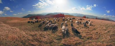 Transcarpathian pastures in autumn Royalty Free Stock Image