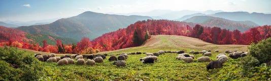 Transcarpathian pastures in autumn Stock Photography