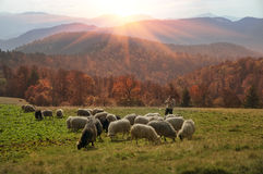 Transcarpathian pastures in autumn Stock Photography