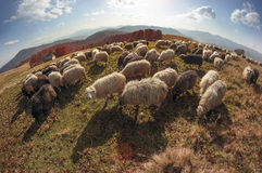 Transcarpathian pastures in autumn Royalty Free Stock Photography