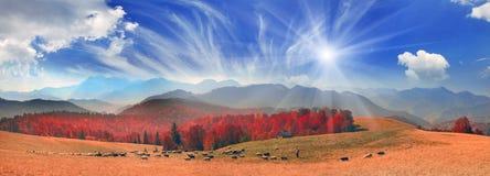 Transcarpathian pastures in autumn Stock Photos