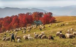 Transcarpathian pastures in autumn Stock Photo