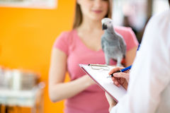 Transcribing therapy to sick parrot in vet infirmary. Diagnosing and transcribing therapy to sick parrot in vet infirmary Royalty Free Stock Photos