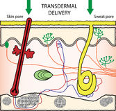 Transdermal средство доставки лекарств Стоковые Фотографии RF