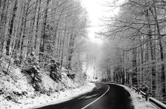 Transfagaras road in Romania in winter with snowy trees Royalty Free Stock Image