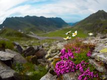 Transfagarasan是其中一条最壮观的山路在世界上,罗马尼亚 免版税库存照片