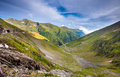 Transfagarasan mountain road with wild flowers from Romania Royalty Free Stock Image