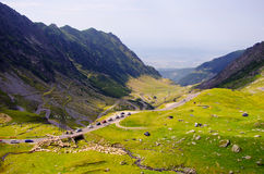 Transfagarasan mountains landscape sheep crossing Royalty Free Stock Images