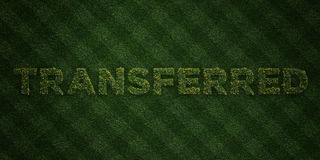 TRANSFERRED - fresh Grass letters with flowers and dandelions - 3D rendered royalty free stock image Royalty Free Stock Image