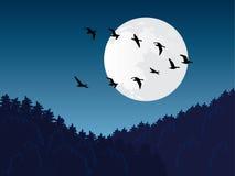 Transfert d'oiseau illustration stock