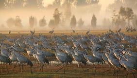 Transfert d'oiseaux Image stock