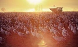 Transfert d'oiseaux Photos stock