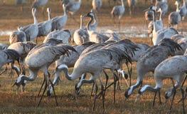Transfert d'oiseaux Images stock