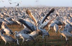 Transfert d'oiseaux Images libres de droits