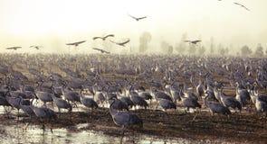 Transfert d'oiseaux Photographie stock