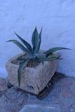 Transfert polaroïd de cactus Photos libres de droits