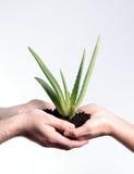 Transfert polaroïd de cactus Photos stock