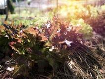 Transform vegetable salad in a natural farm.  stock photos