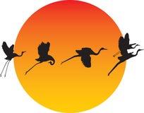 Transformação do pássaro ilustração royalty free