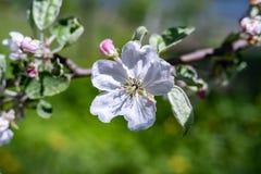 Transformación de la primavera, - flores hermosas de la primavera La primavera ha venido y toda la naturaleza ha florecido imagenes de archivo