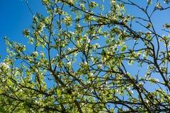 Transformación de la primavera, - flores hermosas de la primavera La primavera ha venido y toda la naturaleza ha florecido Regi?n fotografía de archivo