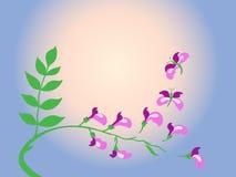 Transformación del acacia púrpura en mariposa. Imagen de archivo libre de regalías