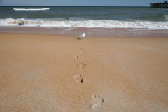 Transformation at the Beach. Human footprints with seagull at the beach Royalty Free Stock Photo