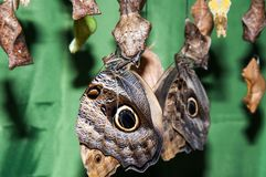Transformation of the chrysalis to Butterfly sailboat Stock Photography