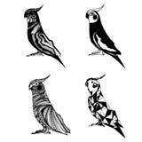 Transformation de perroquet illustration stock