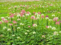 Transforme as flores no gramado verde fresco, ele olha o refrescamento, bonito no verão imagem de stock