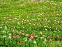 Transforme as flores no gramado verde fresco, ele olha o refrescamento, bonito no verão imagens de stock