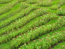 Transforme as flores no gramado verde fresco, ele olha o refrescamento, bonito no verão fotografia de stock royalty free