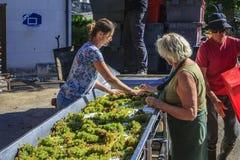 Transformer les raisins moissonnés photo libre de droits