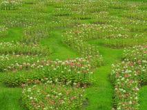 Transformez les fleurs dans la pelouse verte fraîche, il regarde la régénération, belle en été photographie stock