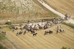 Transhumance of cattle in Spain Royalty Free Stock Photo
