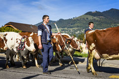 Transhumance event in Charmey Stock Photography