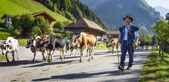 Transhumance event in Charmey Royalty Free Stock Photos