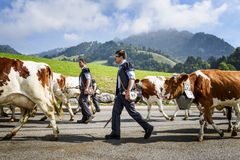 Transhumance event in Charmey Stock Images