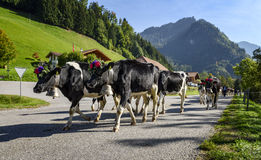 Transhumance event in Charmey Royalty Free Stock Photography