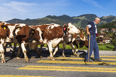 Transhumance event in Charmey Stock Image