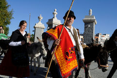 Transhumance .Madrid - Spain Stock Photography